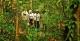 Jungle Hike - Amazon Clipper Cruise