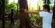 Bow & Arrow, Palmari Amazon Lodge