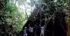 Jungle Trail, Palmari Lodge