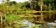 Giant Water Lillies - MY Tucano Amazon Cruise