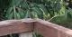 Amazon Snake, Tucan Lodge