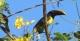 Toucan, Tucan Amazon Lodge