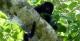 Monkey, Ilha Grande