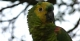 Parrot, Jalapao State Park - Tocantins