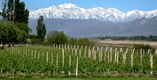 Vineyards of Mendonza, Argentina