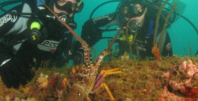 Divers with Lobster; Cabo Frio