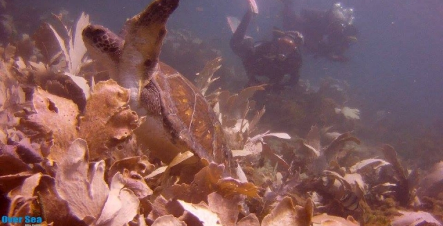 Turtle, Cabo Frio