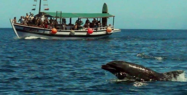Dolphins, Cabo Frio