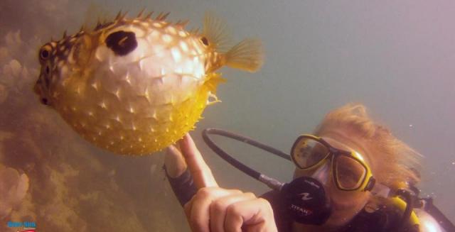 Puffer Fish, Cabo Frio