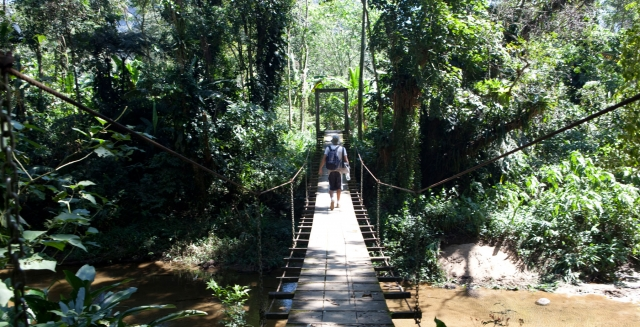 Atlantic Rainforest Bridge, Costa Verde