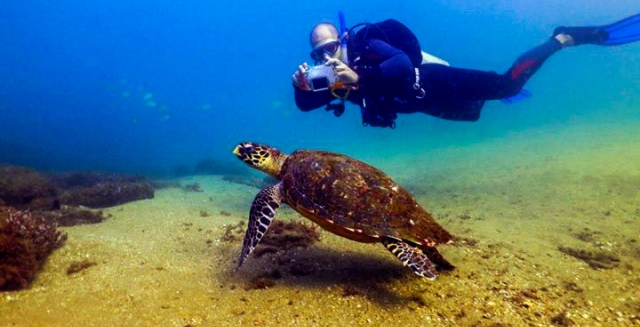 Sea-Turtle; Scuba Diving; Ilhabela