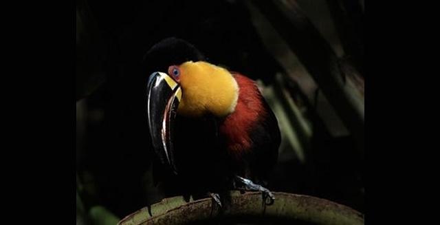 Pousada Rio Mutum, Pantanal Lodge