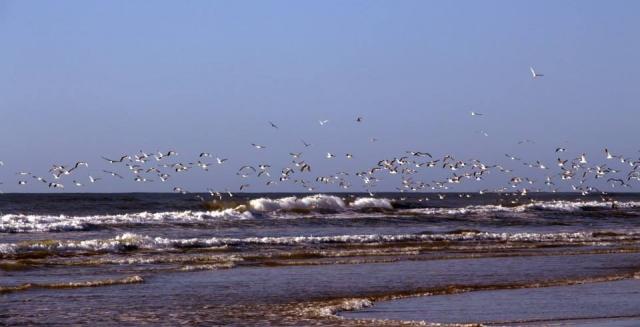 Lighthouse Trek Gulls