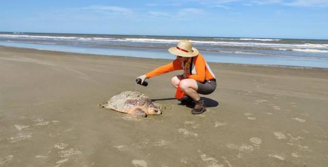 Sea Turtle, Lighthouse Trek