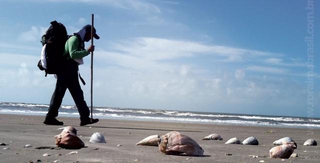 Beach Shells, Lighthouse Trek
