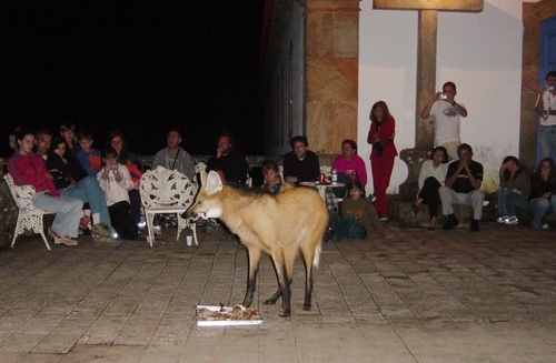 Maned Wolf visiting Santuario do Caraça