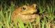 Toad, Tucan Amazon Lodge