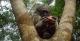 Monkey - Juma Lodge