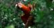 Macaw - MY Tucano Amazon Cruise