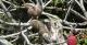 Sloth Family, Mamiraua Nature Reserve