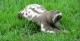 Sloth, Tucan Amazon Lodge