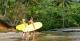 Itacare Surf School