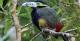 Spot-Billed Toucanet, REGUA Atlantic Rainforest Lodge