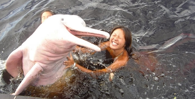 Interact with Amazon River Dolphins