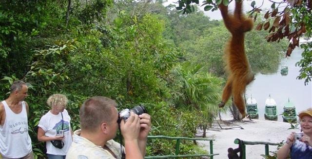 Monkey visiting Amazon Ecopark Lodge