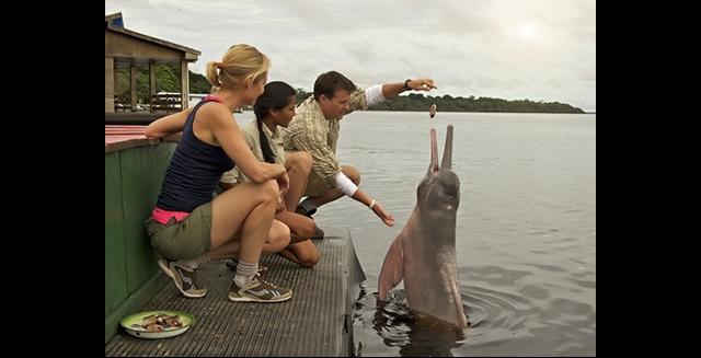 Amazon River Dolphins, Iberostar