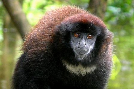 One of many primates seen around Palmari Lodge