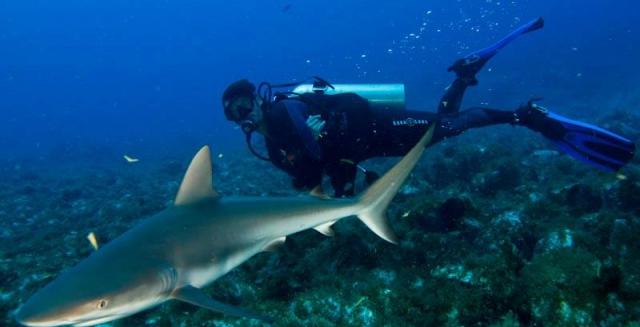 Shark & Diver, Fernando de Noronha