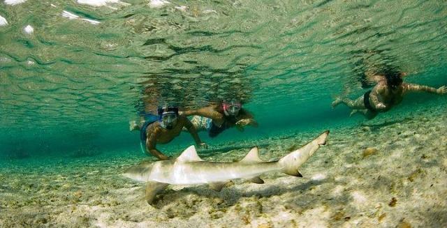 Shark & Snorkellers, Fernando de Noronha