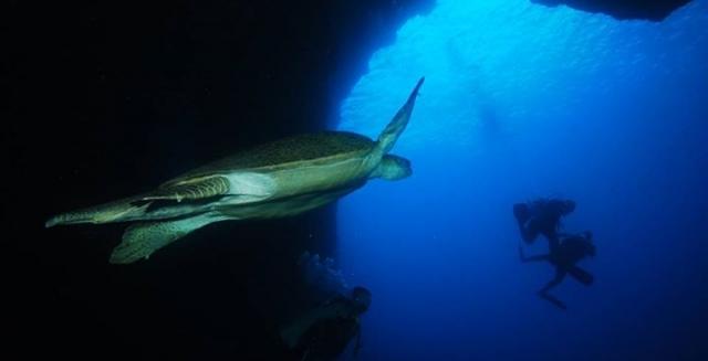 Sea Turtle & Scuba Divers, Fernando de Noronha
